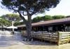 Camping Orbetello Village, Albinia, Tuscany, Italy